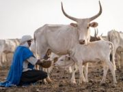 Pastoralism & the SDGs